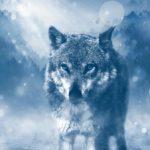 「最後のオオカミ」とは!?あらすじ・結末ネタバレ・読書感想文のコツと書き方の例