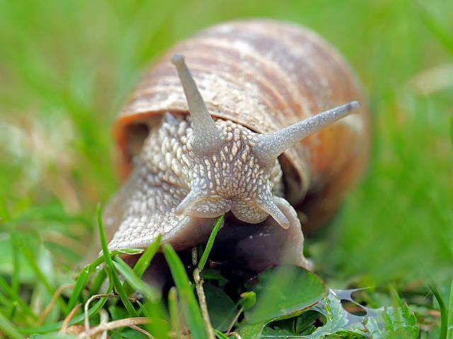 カタツムリの目は触覚の先って本当?どんな見え方をする目なのか