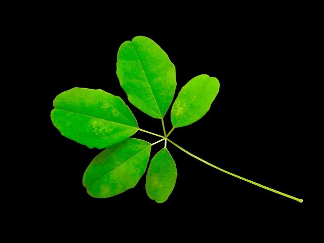 【牧野富太郎〈日本植物学の父〉】で読書感想文!感想文のアイデアと流れの例